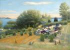 Midday Iris Gardens